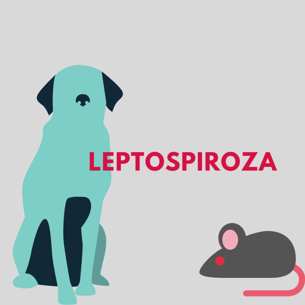leptospiroza zoonoza